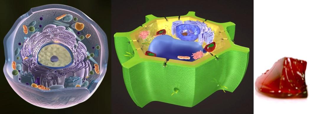Tento obrázok nemá vyplnený ALT popisok, jeho názov je bunka-darwin-zivocisna-rastlinna-zele.jpg
