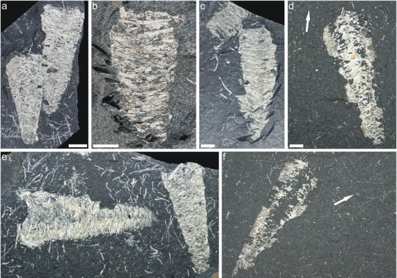 Tento obrázok nemá vyplnený ALT popisok, jeho názov je hodvab-vyvracia-evoluciu-295-milionov-rokov.jpg