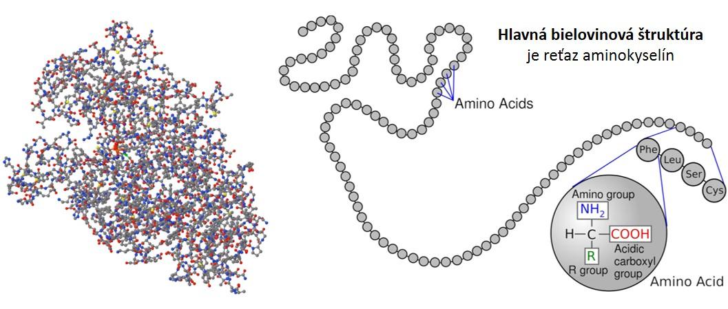Tento obrázok nemá vyplnený ALT popisok, jeho názov je stavba-bielkovin-aminokyseliny.jpg